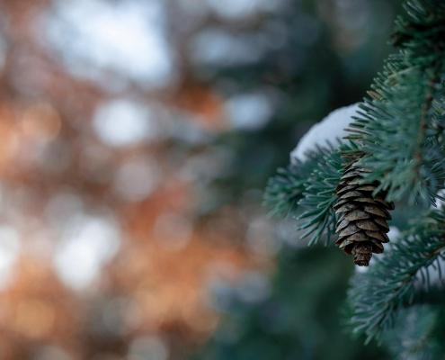 Planter un arbre - Digiteal