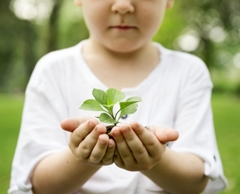 Digiteal Forest Growing tree in child's hands